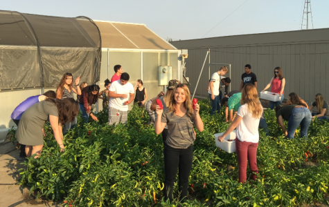 Ag Foods classes pick fresh produce from the school garden.
