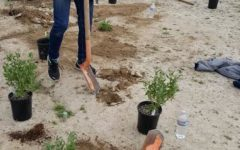Environmental Club Participates in Planting Project at San Luis Refuge