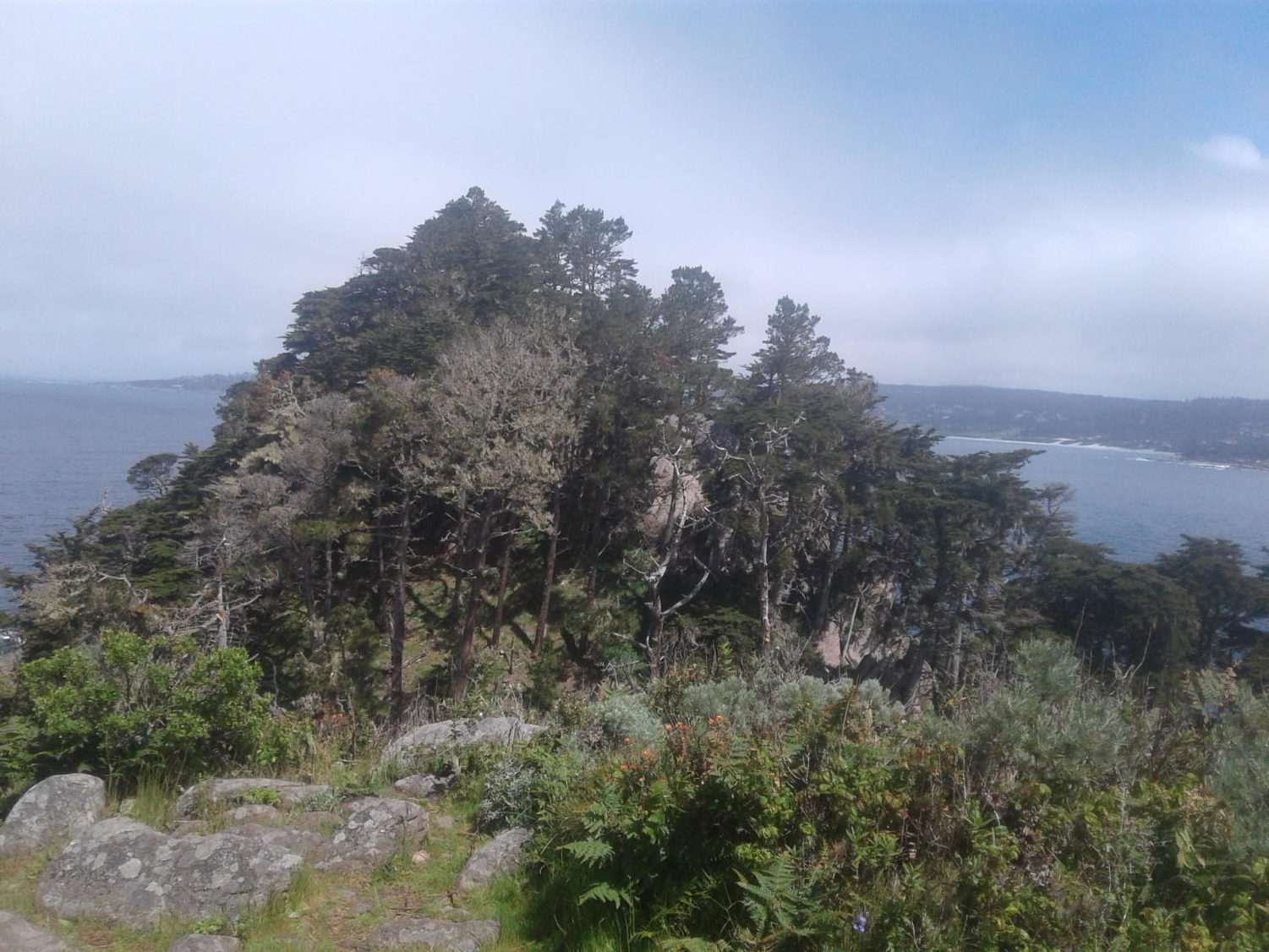 View at Point Lobos State Natural Reserve